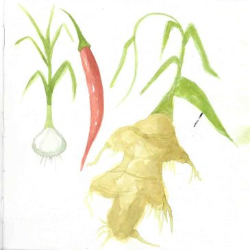 Watercolour plants/vegetables